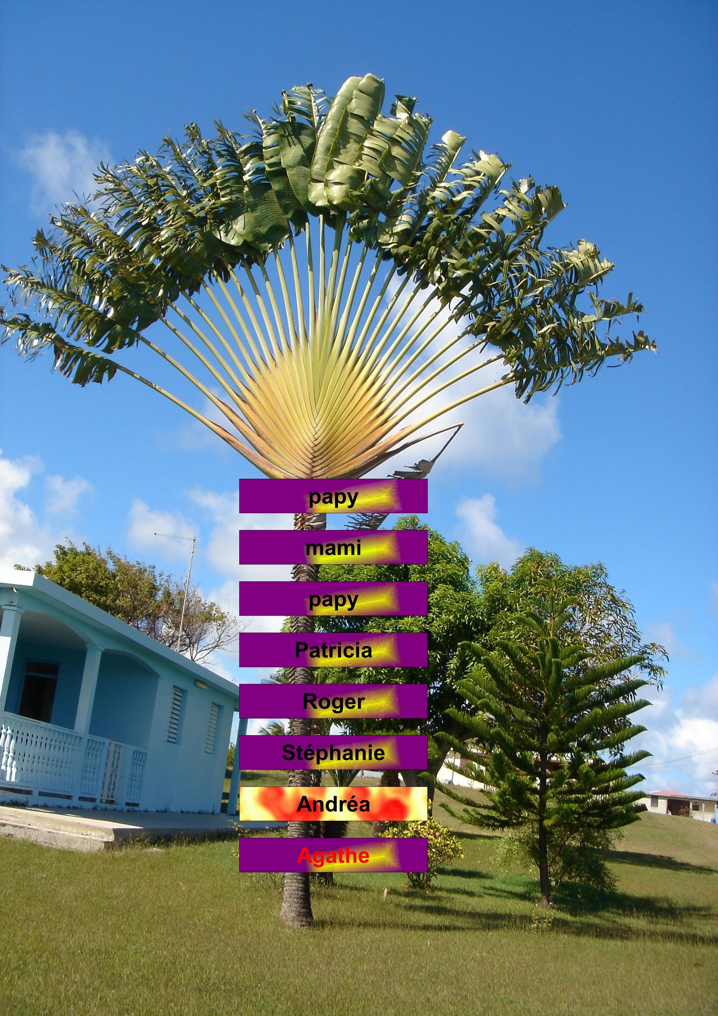 arbreandrapdf01.jpg